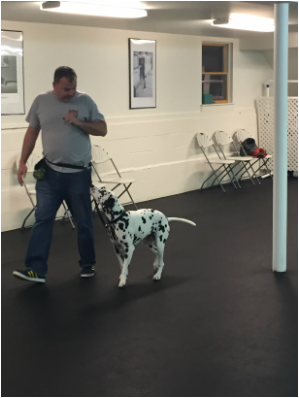 Advanced Obedience - Mr  Dog Training